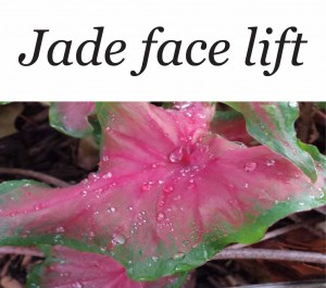 Jade Face Lift Services